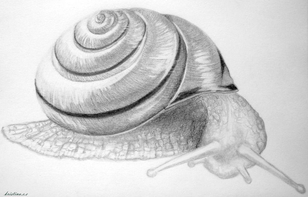 Рисунок улитка карандашом