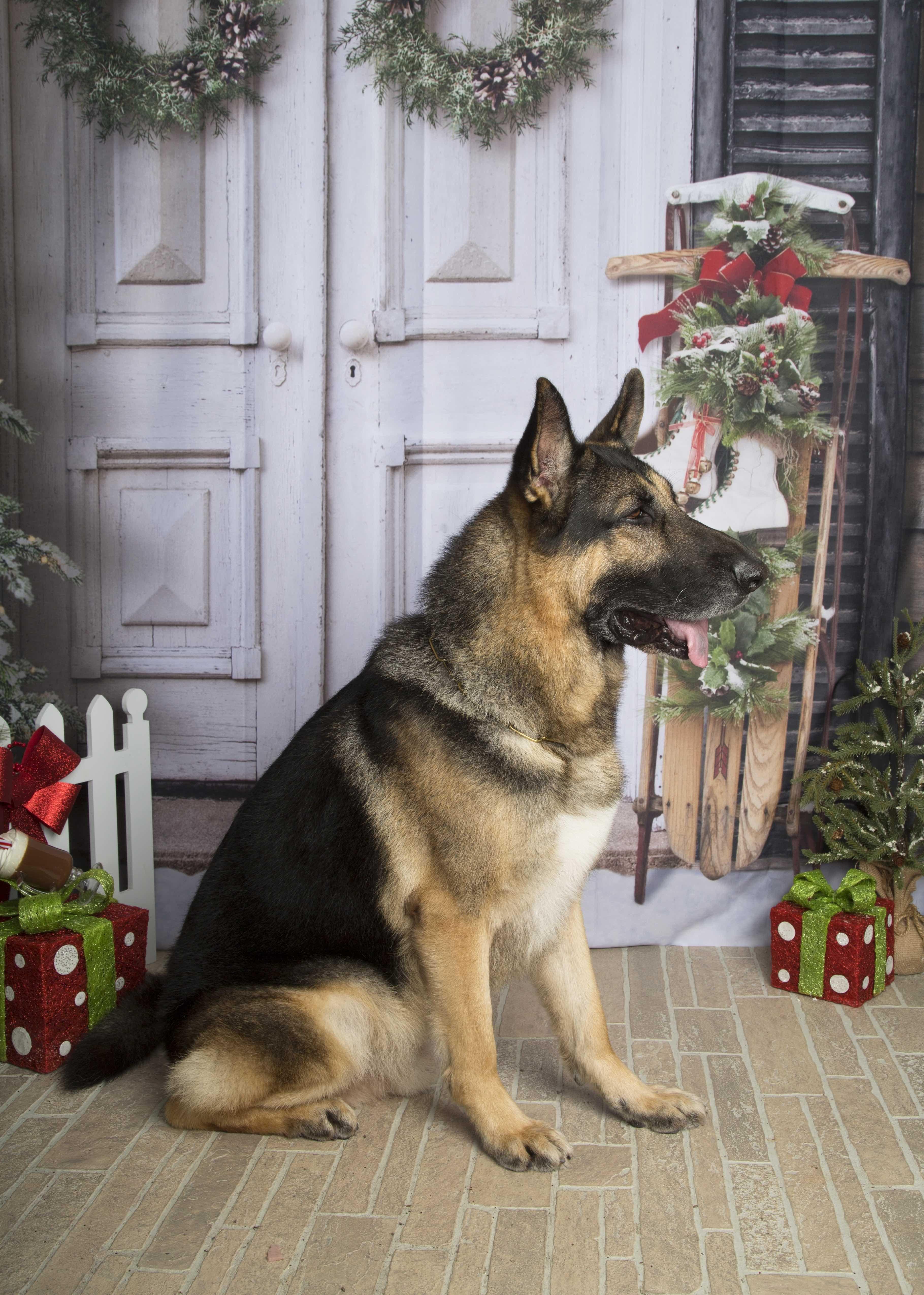 Pin By L Bank On German Shepherd German Shepherd Dogs Christmas