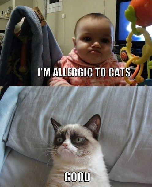 Grumpy Cat Likes This Kid Because The Kid Is Allergic To Cats Grumpy Cat Humor Funny Cat Memes Grumpy Cat Meme
