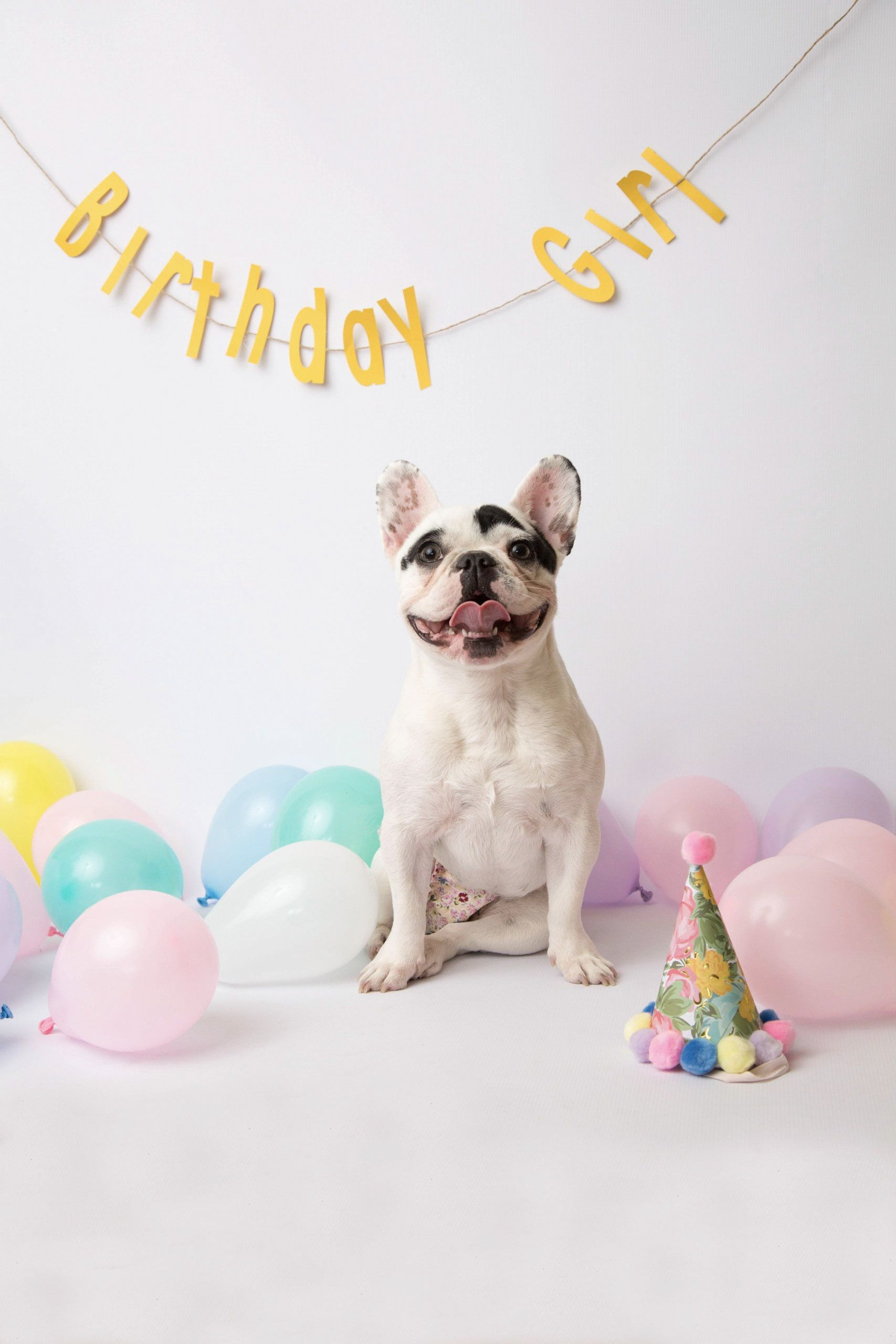 Communication on this topic: Baby and Bulldog Share the Same Birthday—and , baby-and-bulldog-share-the-same-birthday-and/