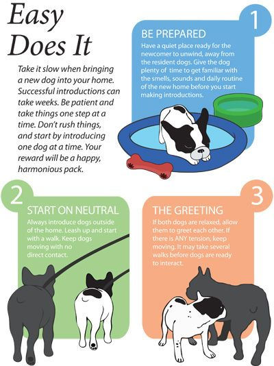Introducing A New Dog Helpful Pet Care Training Rescue Dog