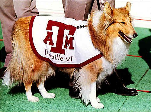 Today In Texas History Legislature Creates Texas A M University Texas A M Famous Dogs Live Mascot