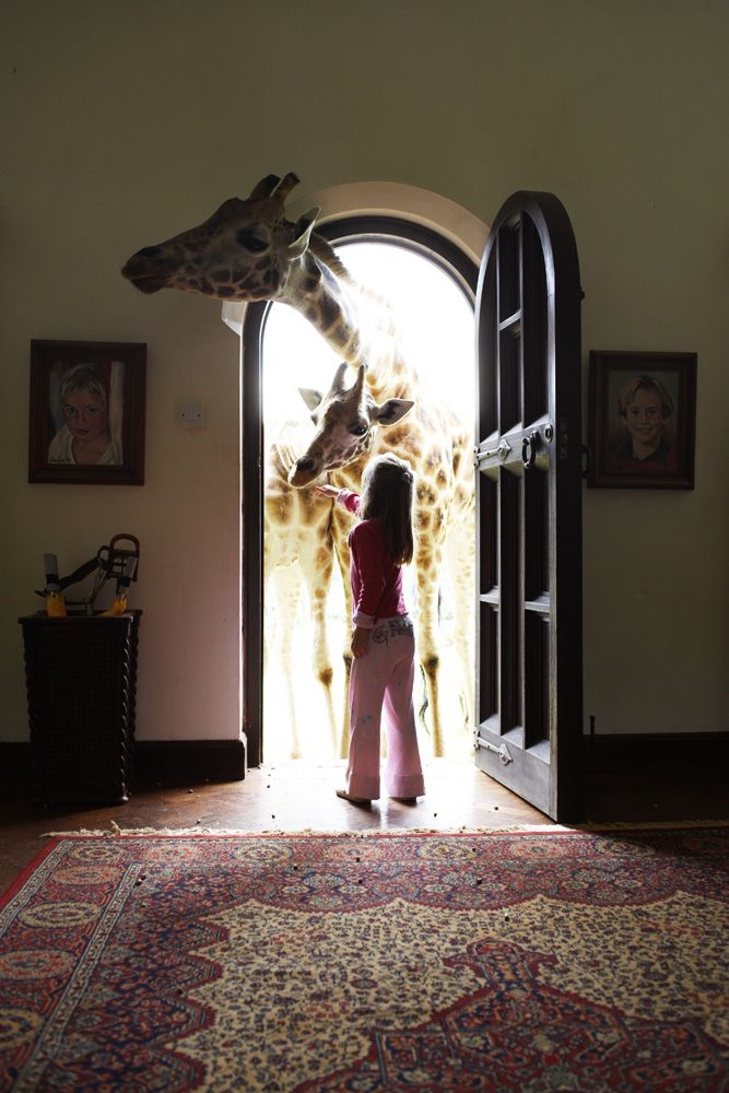 Afrika, Kenia, Nairobi, 2007, Giraffe Manor, Copyright www.peterrigaud.com