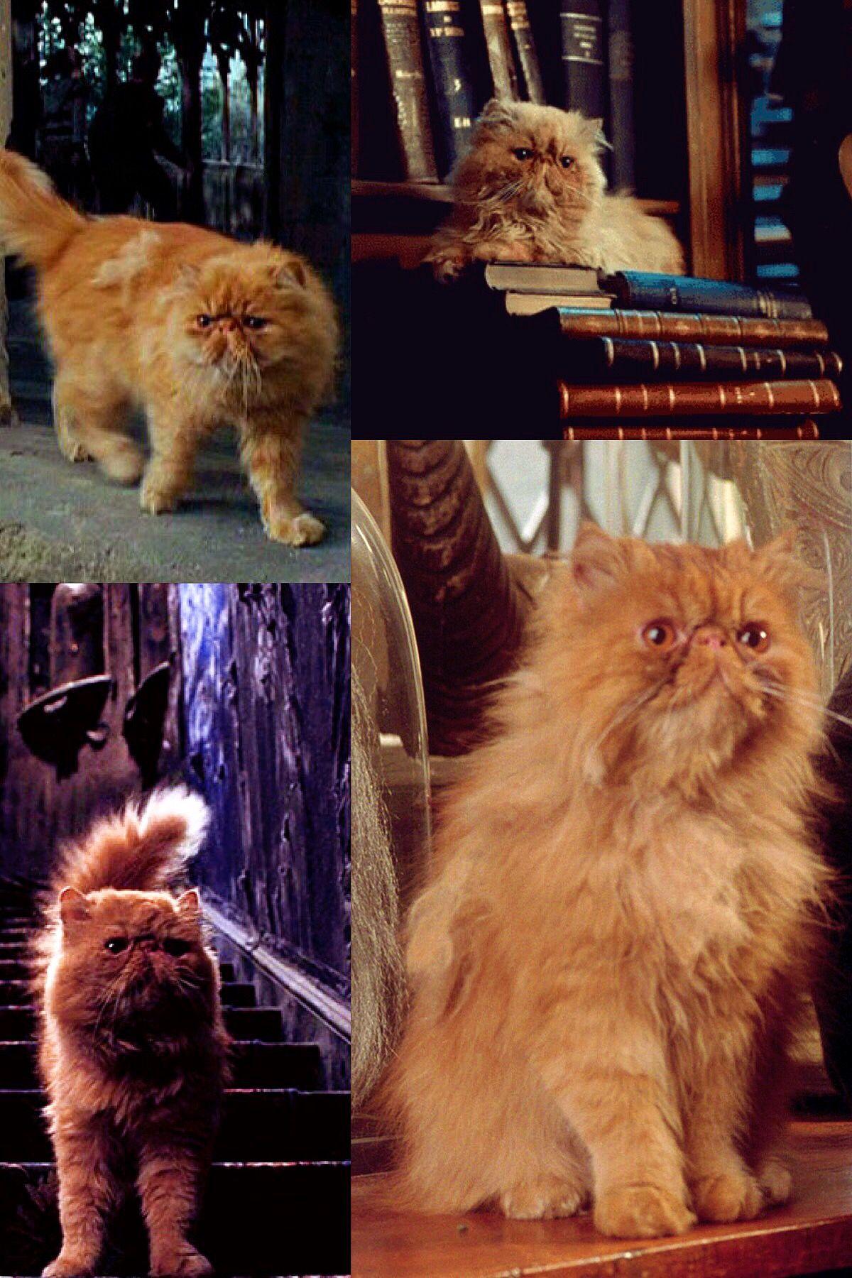 Crookshanks Harry Potter Characters Harry Potter Cast Harry Potter Quilt
