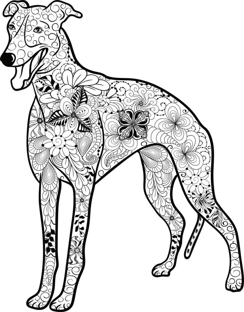 kostenloses ausmalbild hund - galgo. die gratis mandala