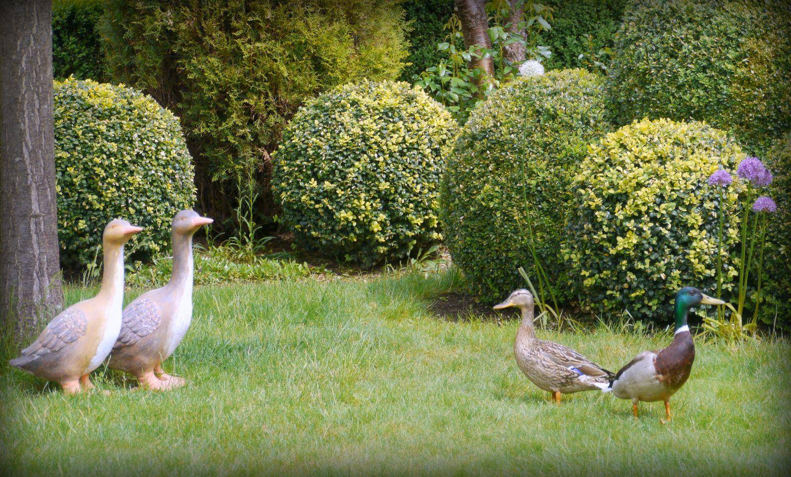 was sind denn das für komische Vögel ? - Bilder und Fotos