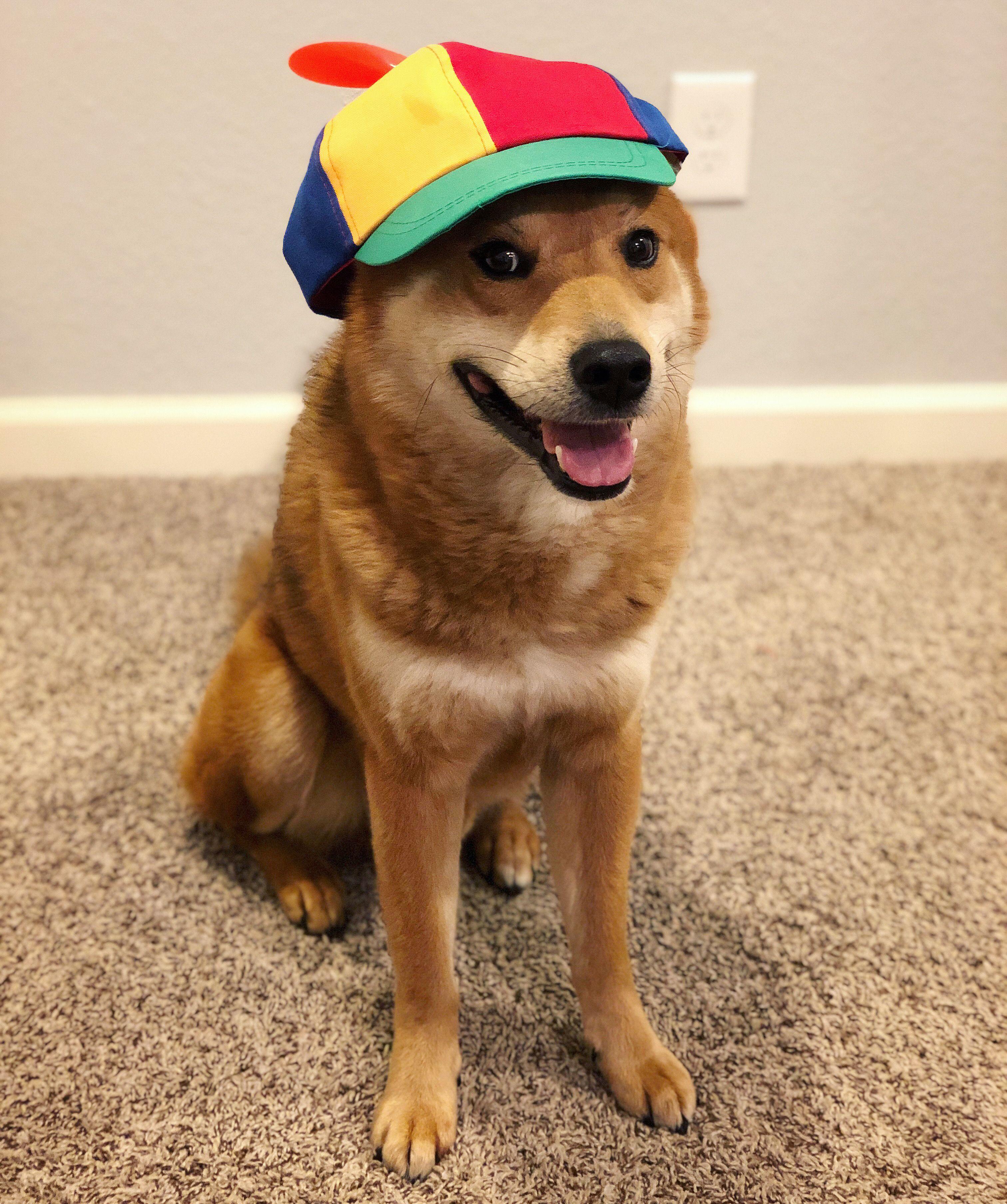 Jaxx Cap In 2020 Dog Life Best Dogs Jaxx