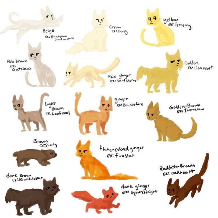 Cat Colors By Moonkitti Warrior Cats Books Warrior Cats
