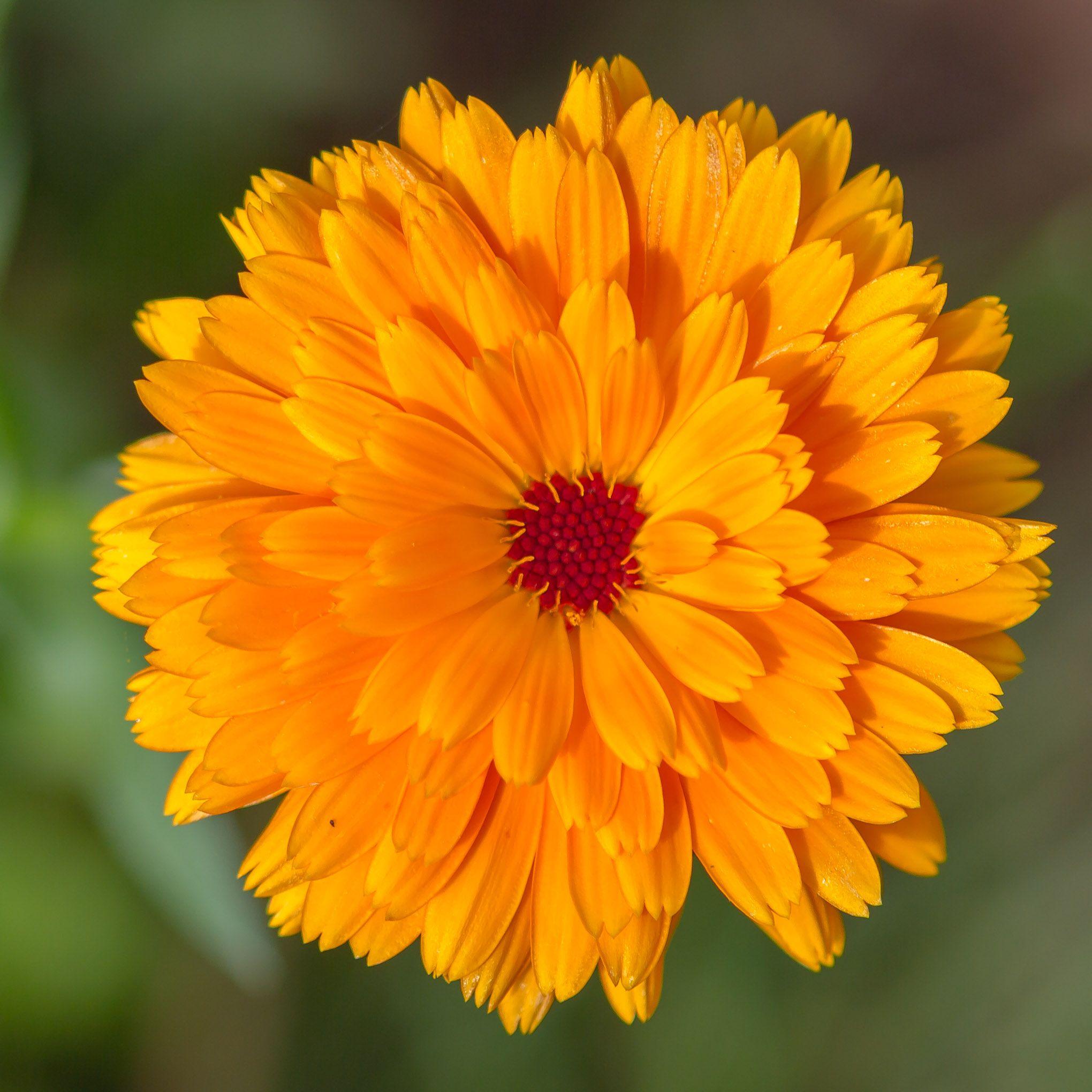 Pin by rosibel nieblas on Flor Pinterest Flowers Plants and Flora