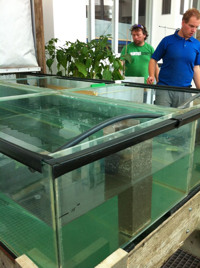 Aquaponics crayfish fish tank aquaponics greenhouse for Fish used in aquaponics