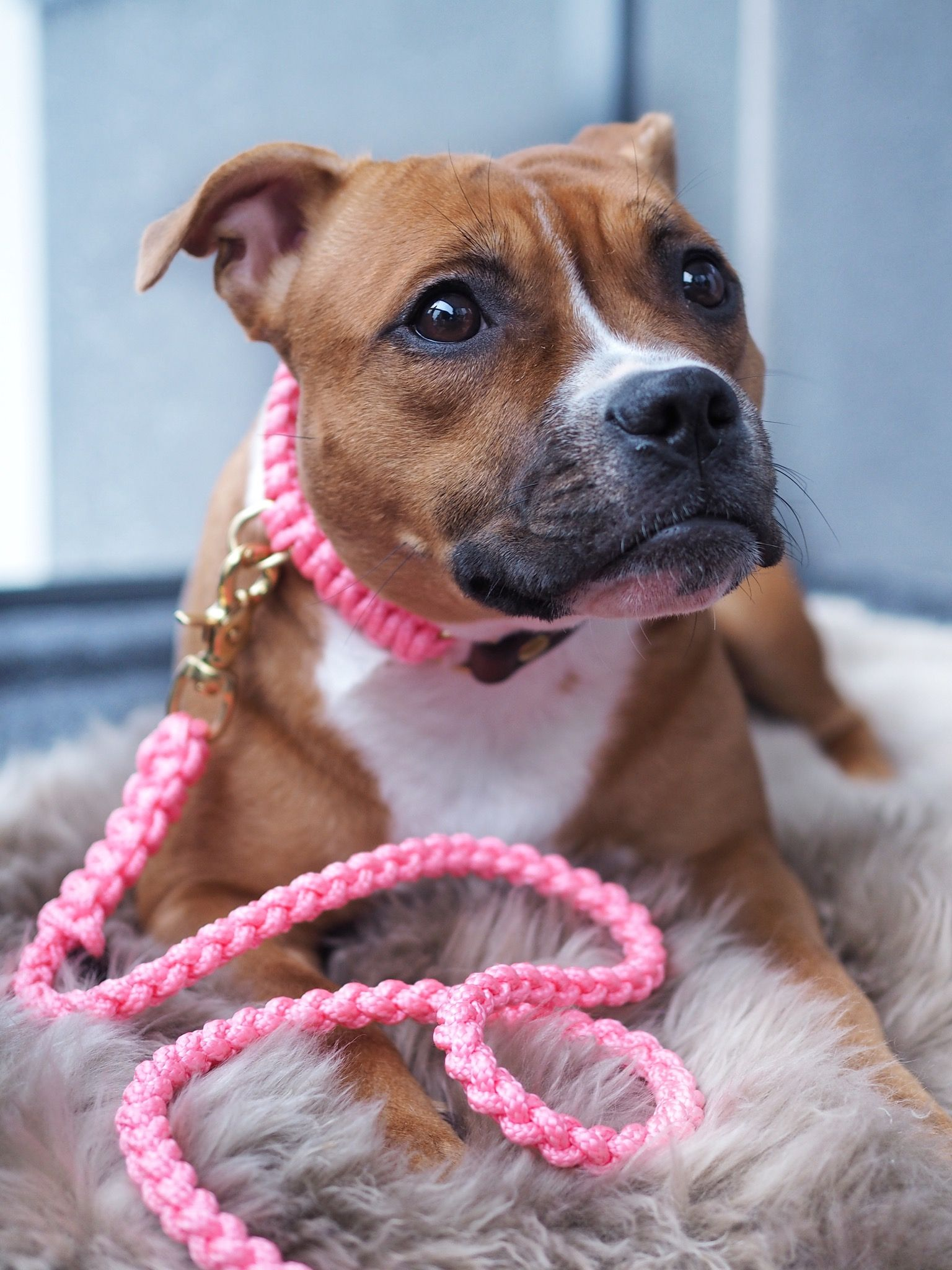 Always Think Pink Maritime Style Leash And Collar In The Color
