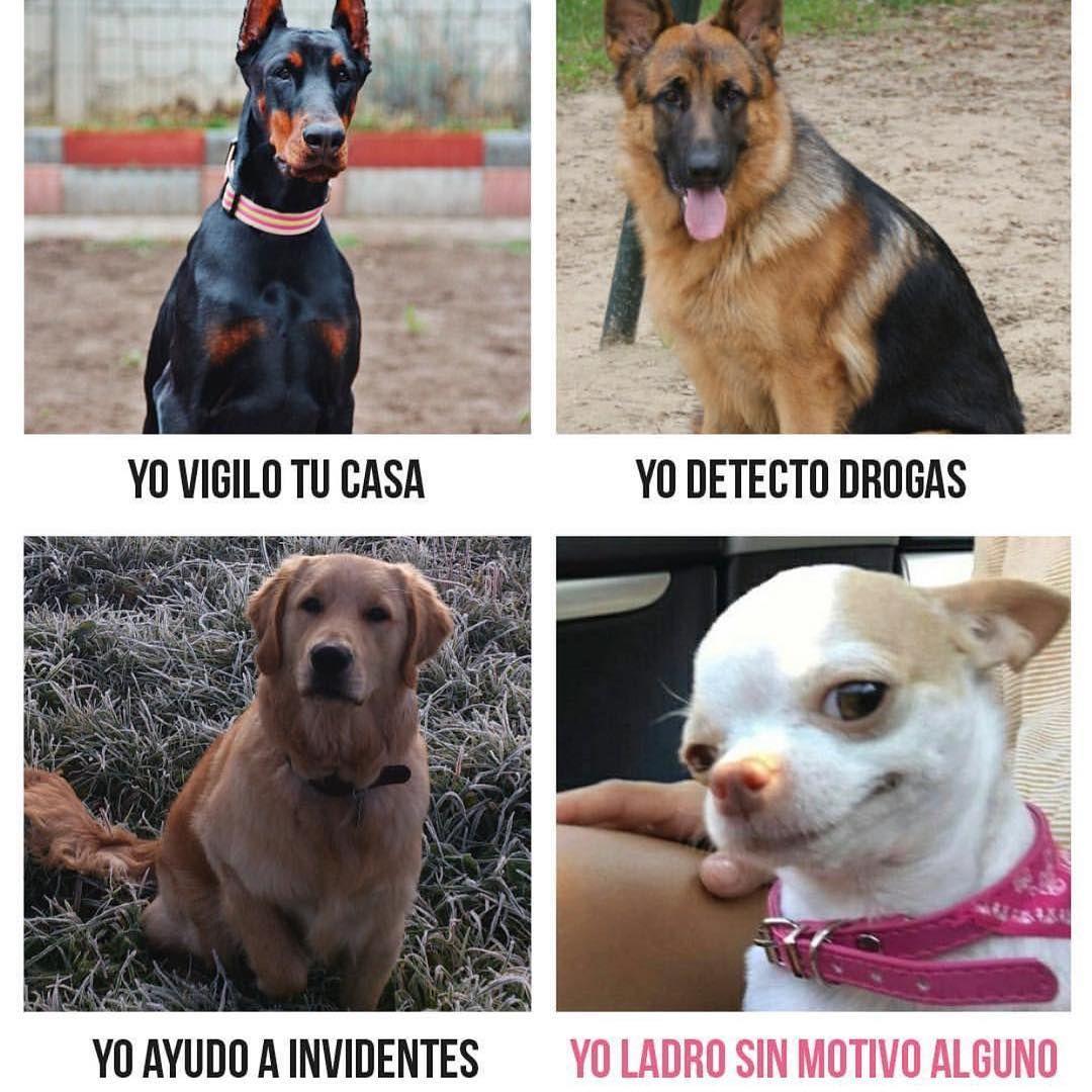 No Te Lo Pongas On Instagram Jajajs Total Memes De Animales Divertidos Memes De Perros Chistosos Memes Perros