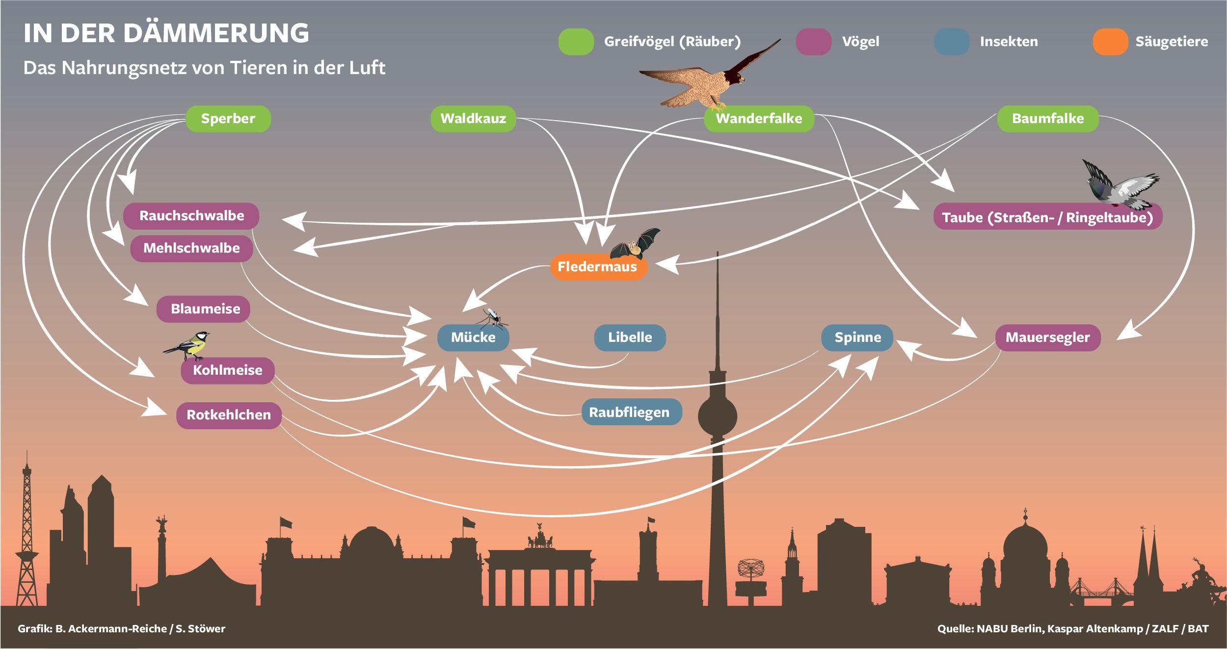 Groß Nahrungsketten Und Nahrungsnetze Arbeitsblatt Ideen - Super ...