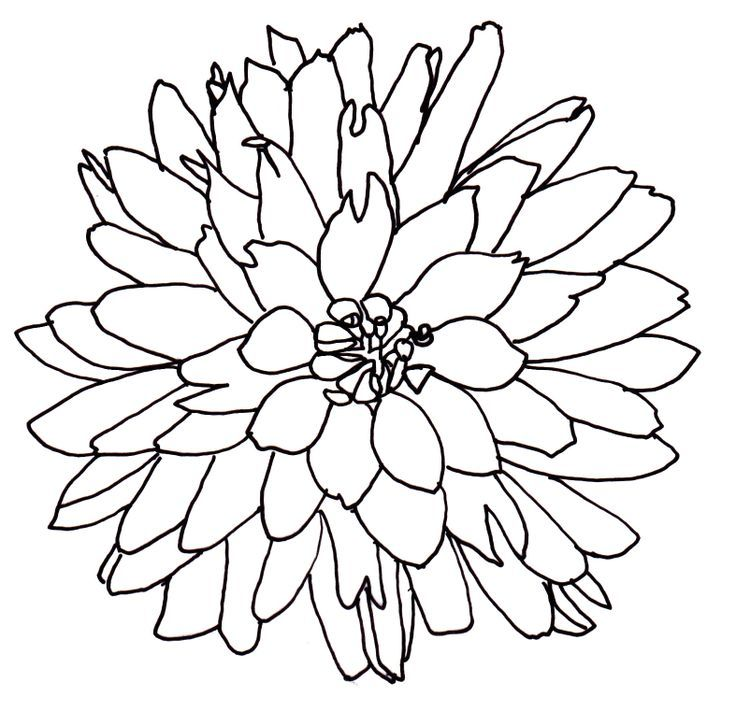 Line Art Download Free : Line drawing of a flower free download clip art