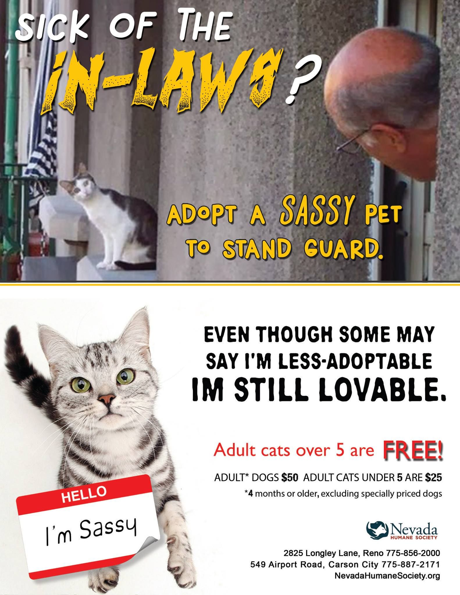 Pin By Kathy Doucette On Pet Adoption Advertising Pet Adoption Cat Adoption Pets