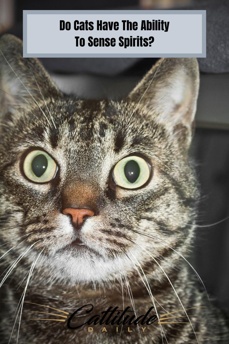 Can Cats Sense Spirits In 2020 Cats Cat Behavior Cat Care Tips