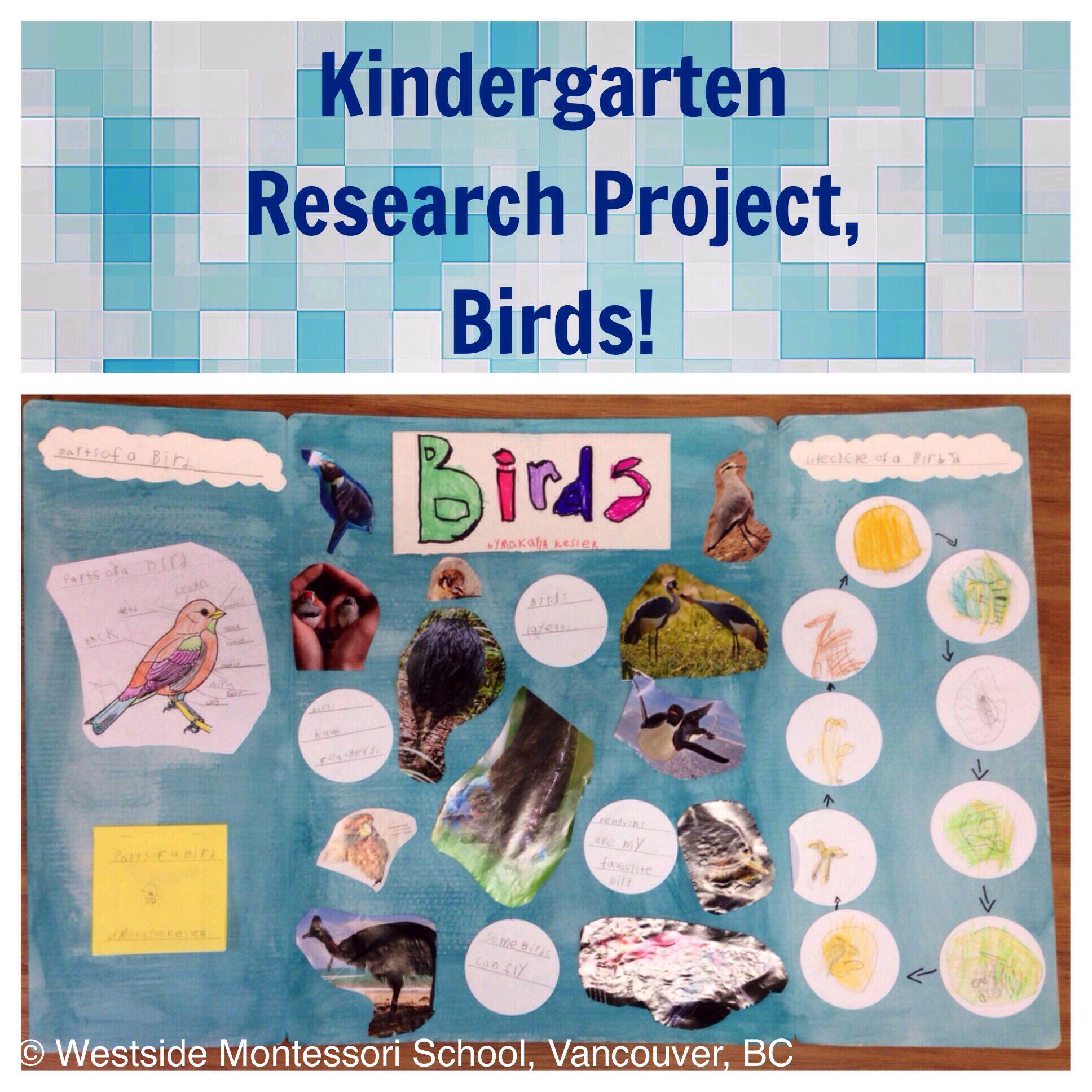 Montessori Zoology Project On Birds The Kindergarten