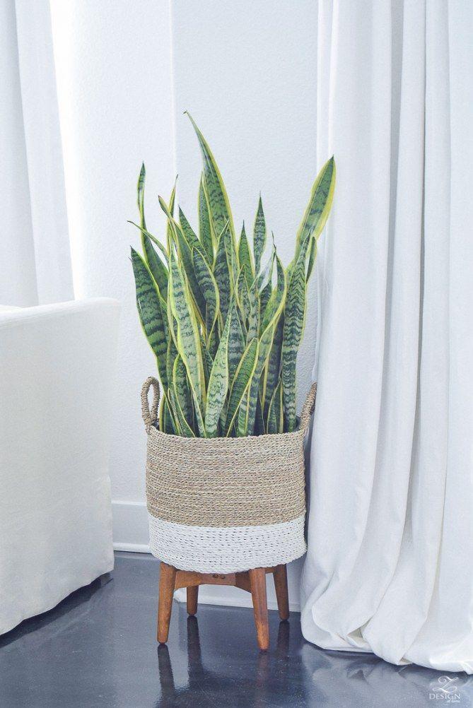 Quelle plante avoir dans la chambre chambre plante chambre d coration plantes int rieur - Plante dans la chambre ...