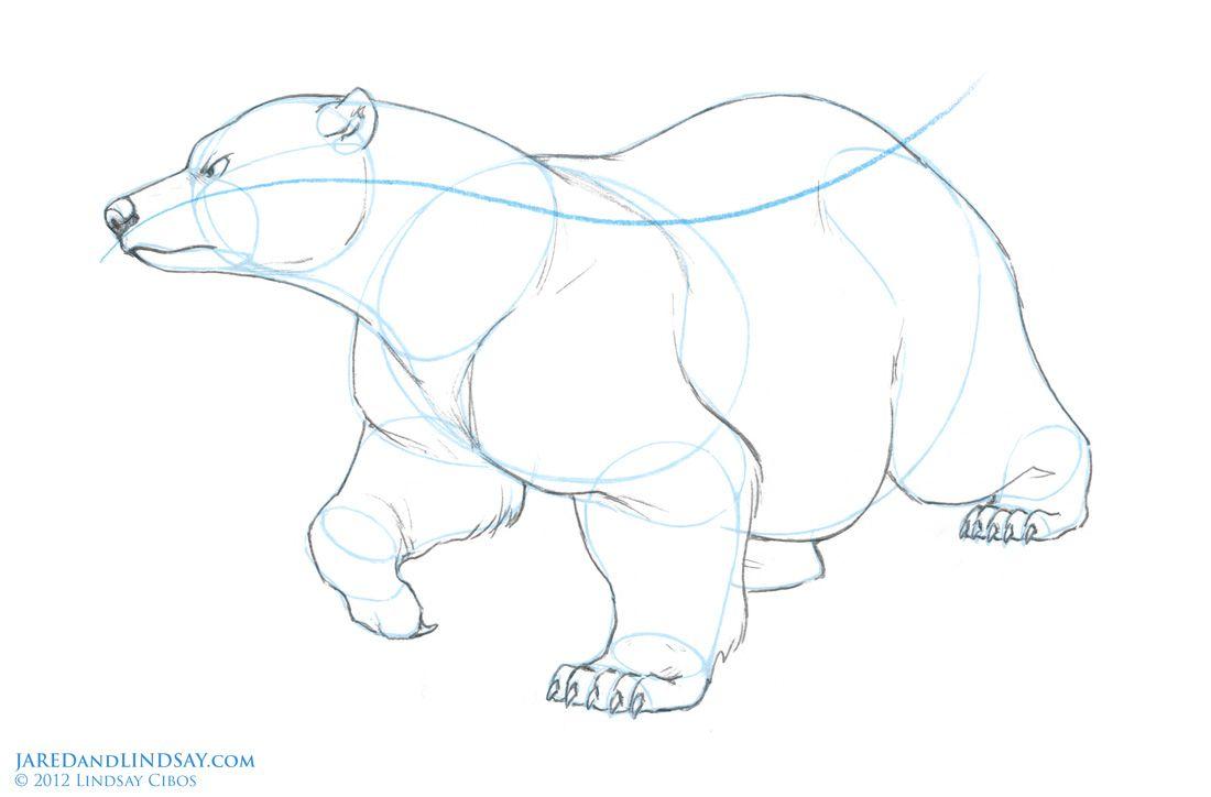 The Last of the Polar Bears - How to Draw a Polar Bear | character ...