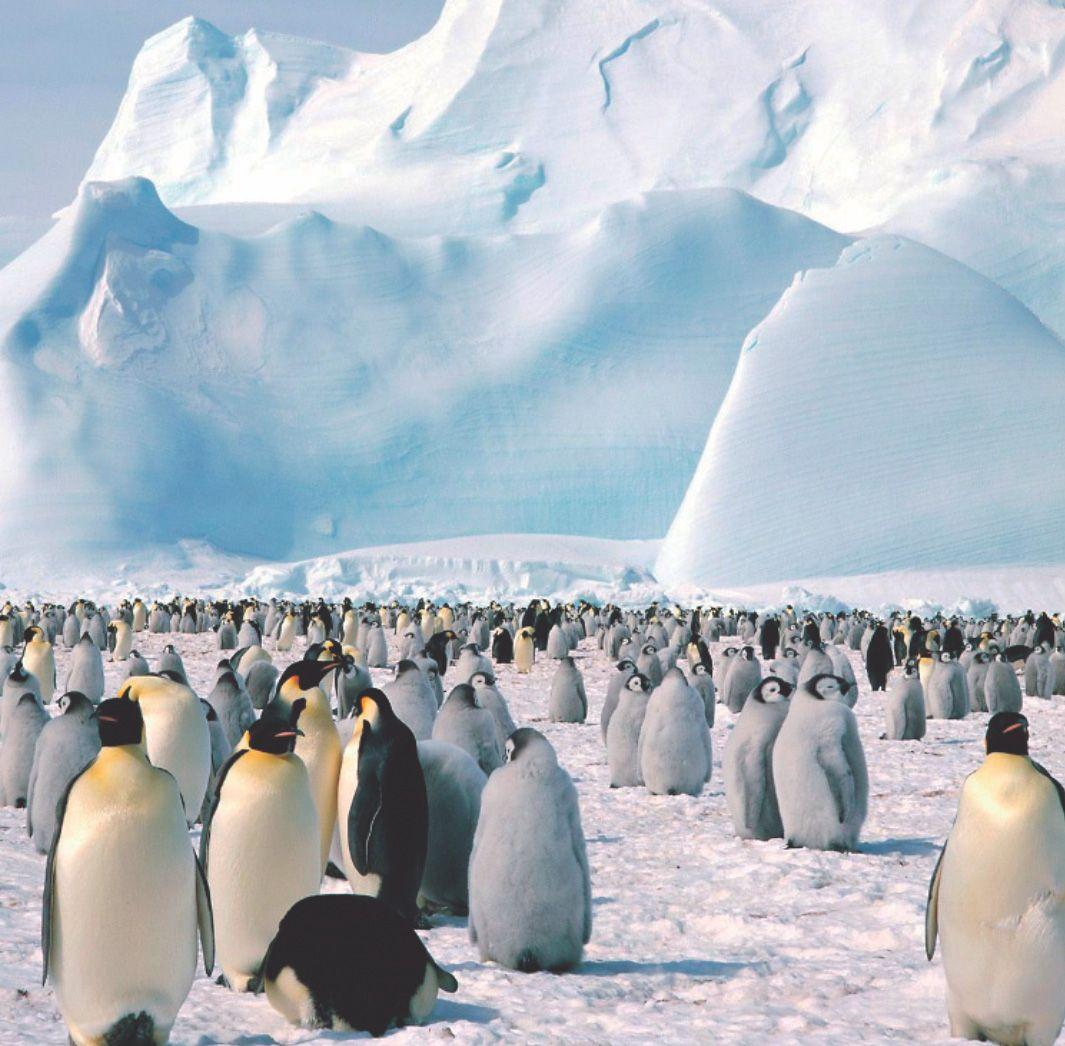 Pinguins ♥