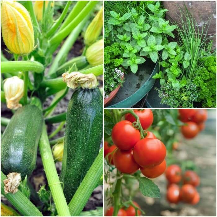 5 Vertical Vegetable Garden Ideas For Beginners: Gardening For Beginners -Vegetable Gardening For Beginners