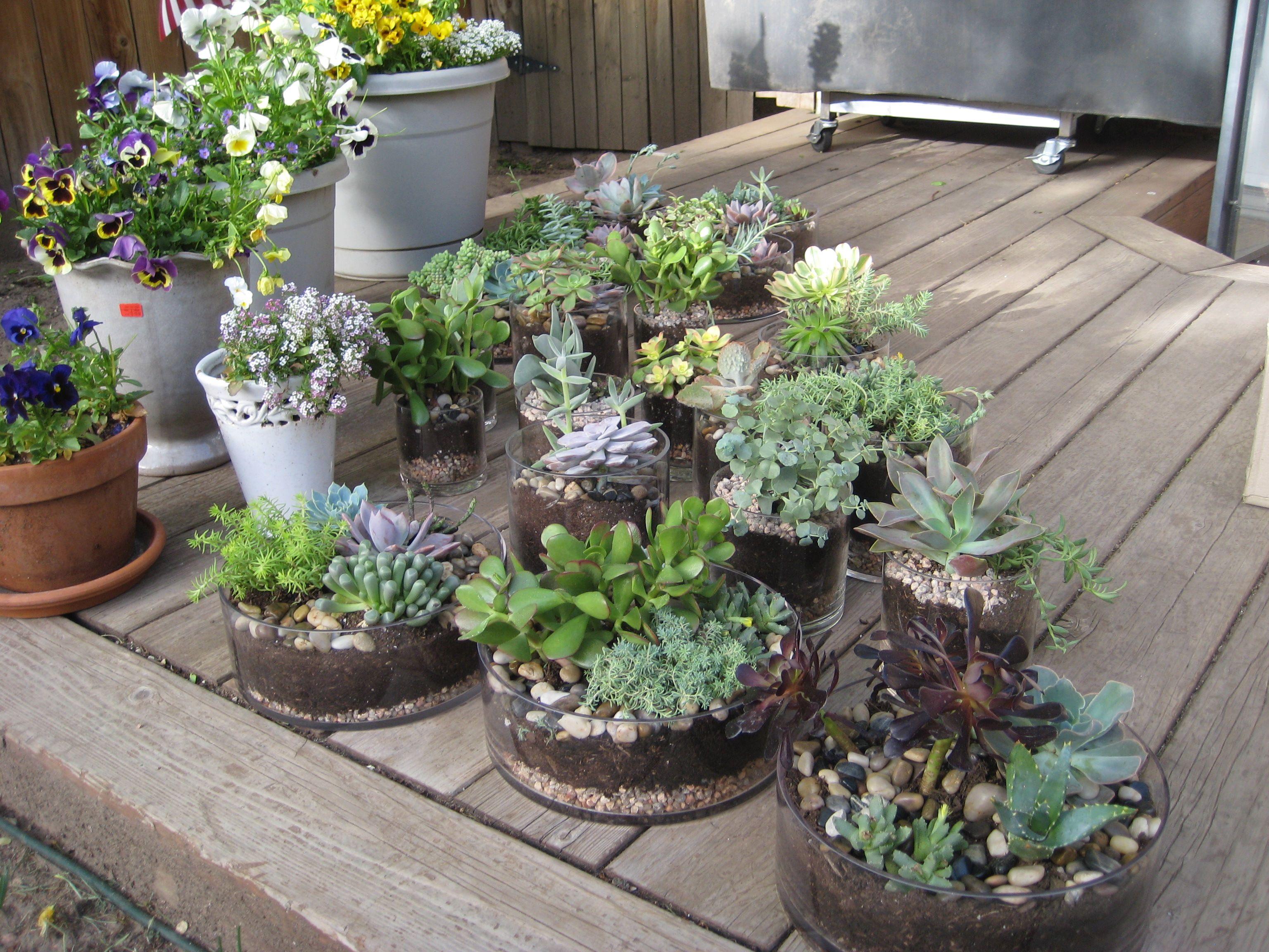 Diy succulent wedding centerpieces wedding pinterest succulent