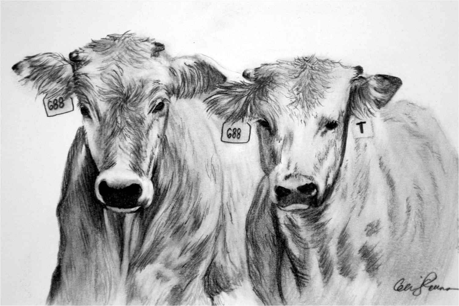cow head pencil drawing images amp pictures becuo art