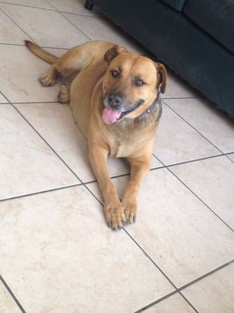 Pin On Found Dogs Az
