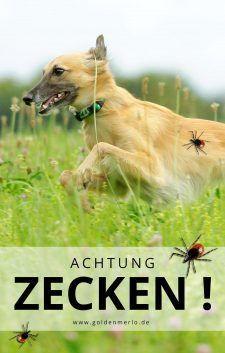 Achtung Zecken So Schutzt Du Deinen Hund Silken Windsprite Goldenmerlo De Hunde Zeckenschutz Hund Zecken