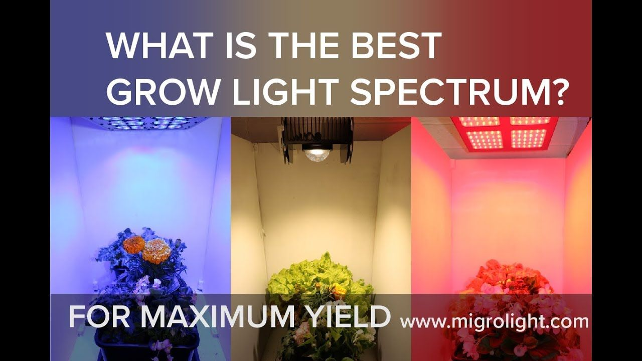 Best Led Grow Light For Veg And Flowering Reviews And 400 x 300
