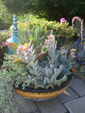 Cool succulent pot from Linda Phair in Fairfield, Maine.