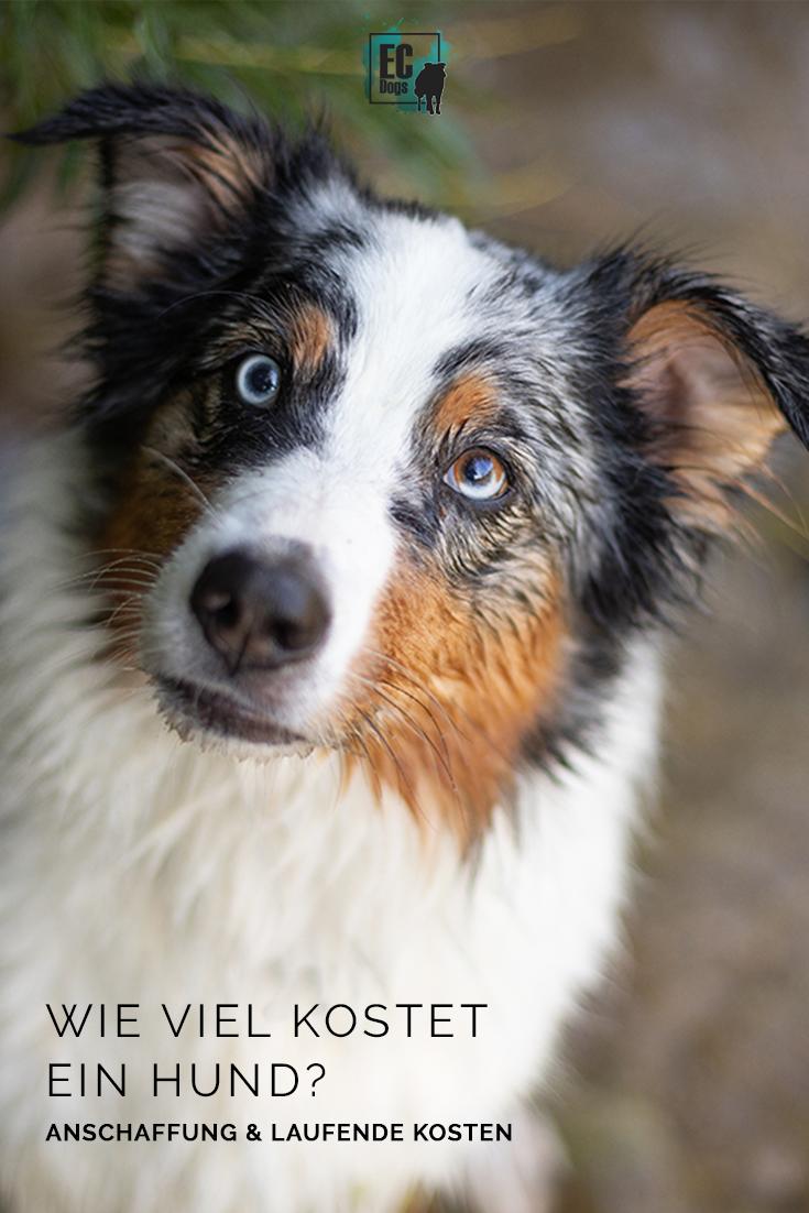 Wie Viel Kostet Ein Hund Anschaffung Laufende Kosten In 2020 Hunde Hundetricks Urlaub Mit Hund