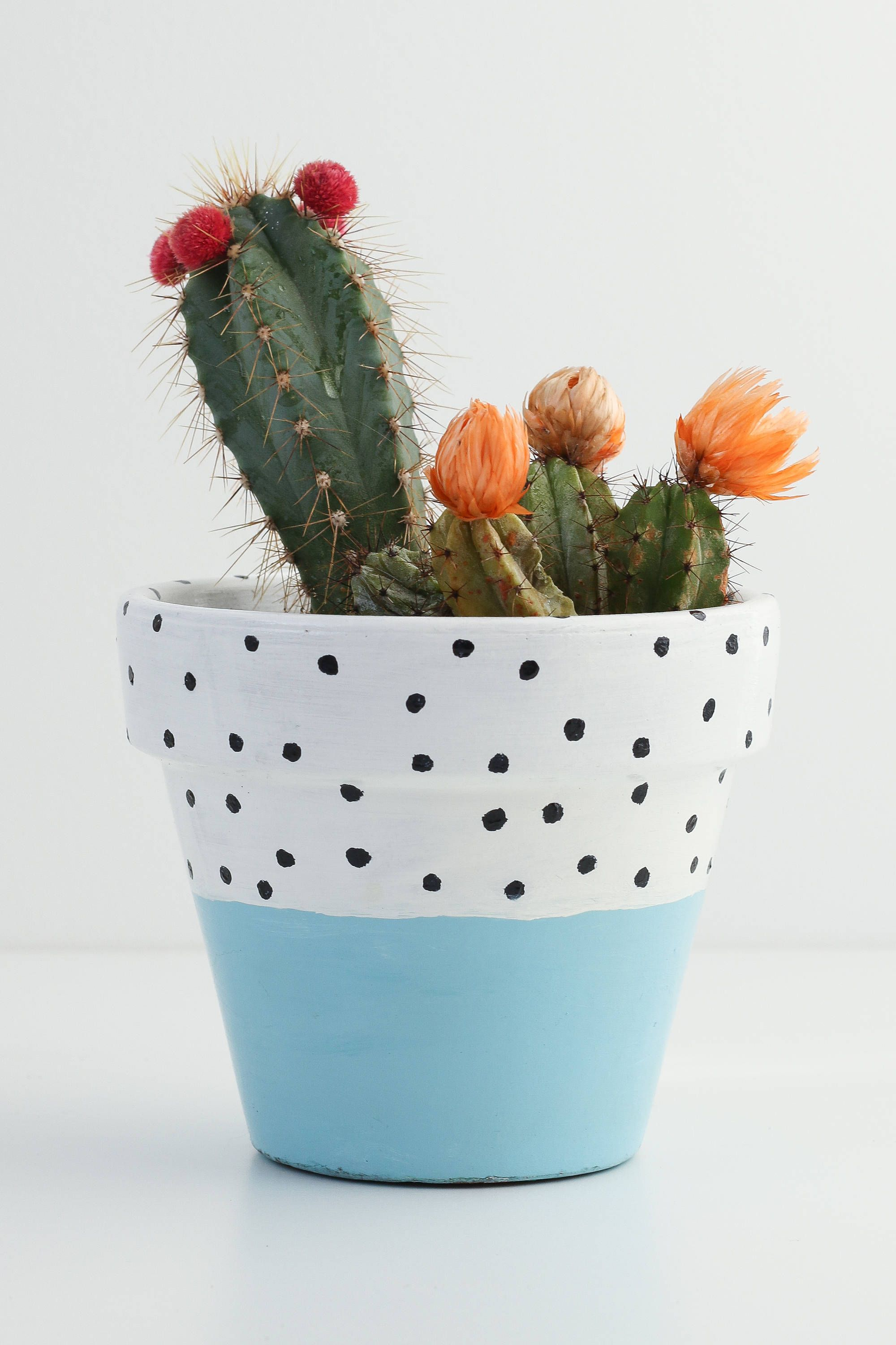 Pastel Blue White And Black Polka Dot Plant Pot 11cm X 9 5cm Indoor Or Outdoor Use Flower Pot Art Painted Plant Pots White Plants