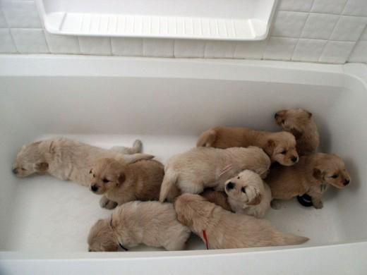 Link Permanente Da Imagem Incorporada Cute Animals Puppies Cute Creatures