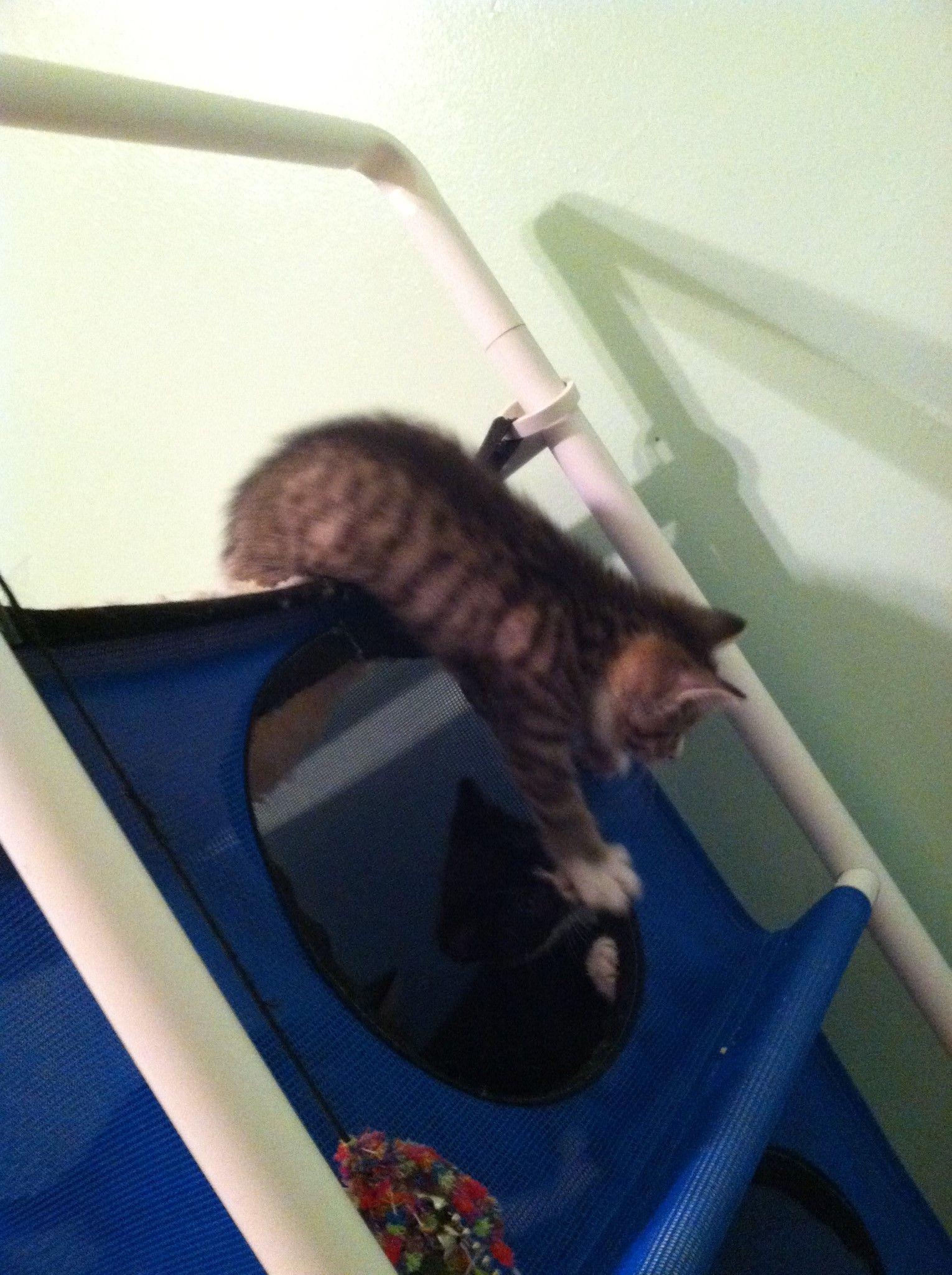 Buying a Indoor Cat Hammock Cat Trees Pinterest