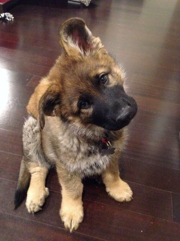 Puppy head tilts are the cutest!
