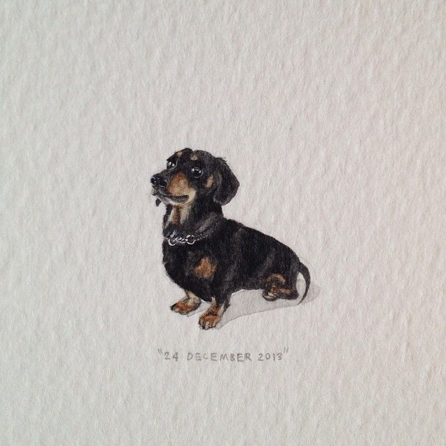 Day 358 Meet Harry The Daxi For Victoria 20 X 24 Mm
