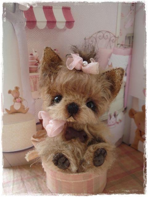 Teddy Bear-love: dogs