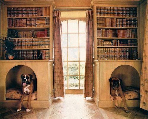 #dogstagram #dogstorage #boxers #inspiration #notmyphoto