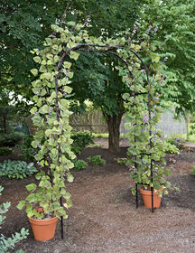 Titan Garden Arch - 7' Tall Black Metal   Gardeners.com