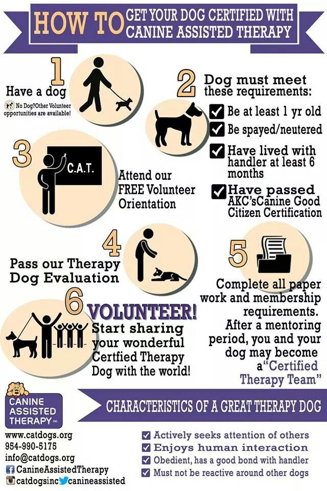 For Certification Of Therapy Dog Therapy Physical And Dog