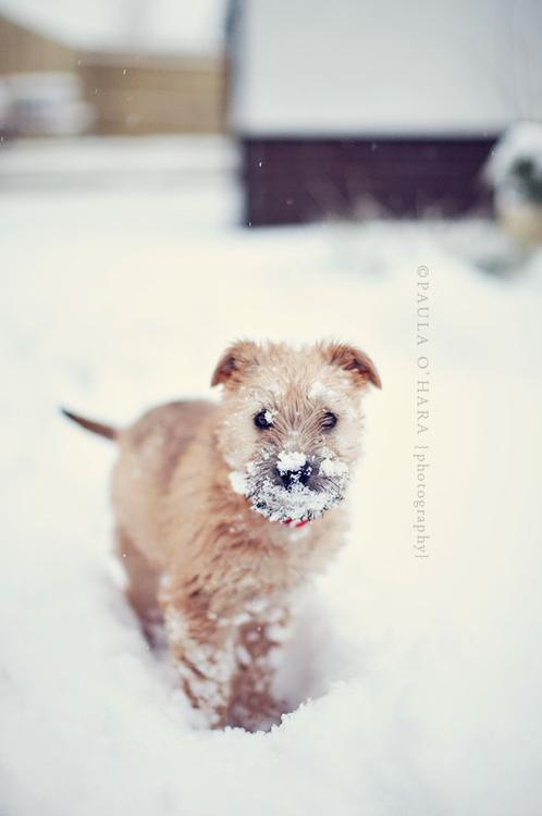 Snow nose