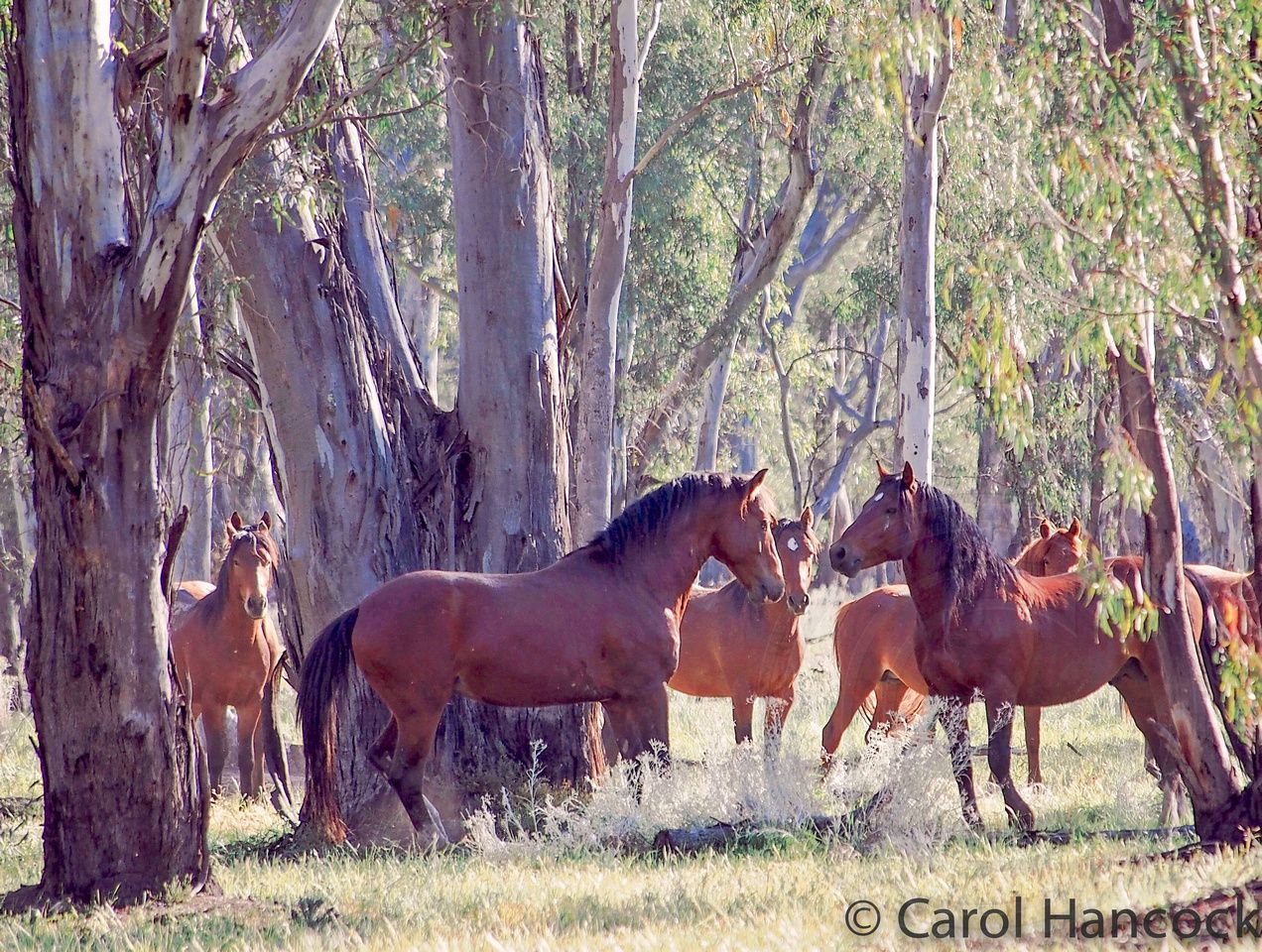 Equine Dating Australia - Join for free & find love today