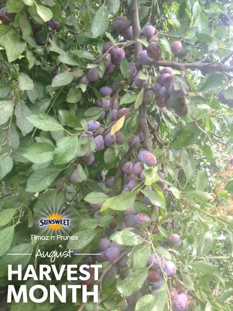 #happyharvest