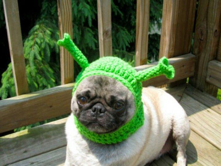 Mops As Shrek Dog Hat Cute Pugs Dogs