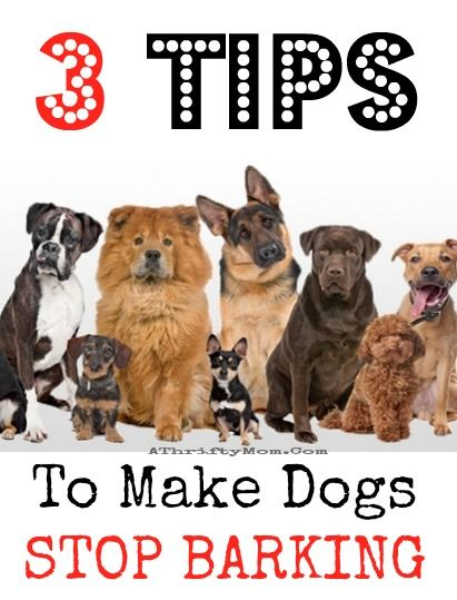 3 Tips To Make Dogs Stop Barking Pets Hacks Pets Dogs Dog