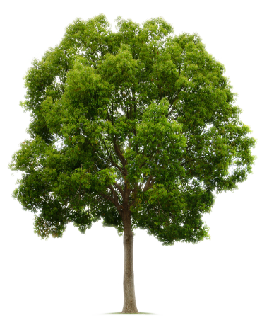 Image result for trees pics