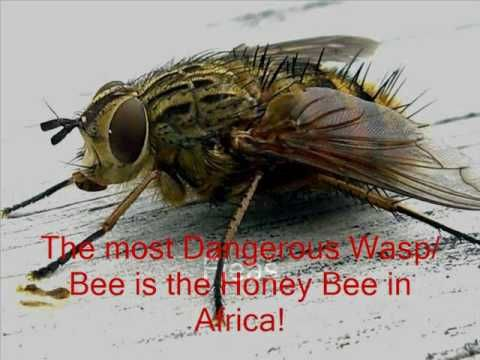 Top 5 Dangerous Insects (Based on Deaths from Humans)