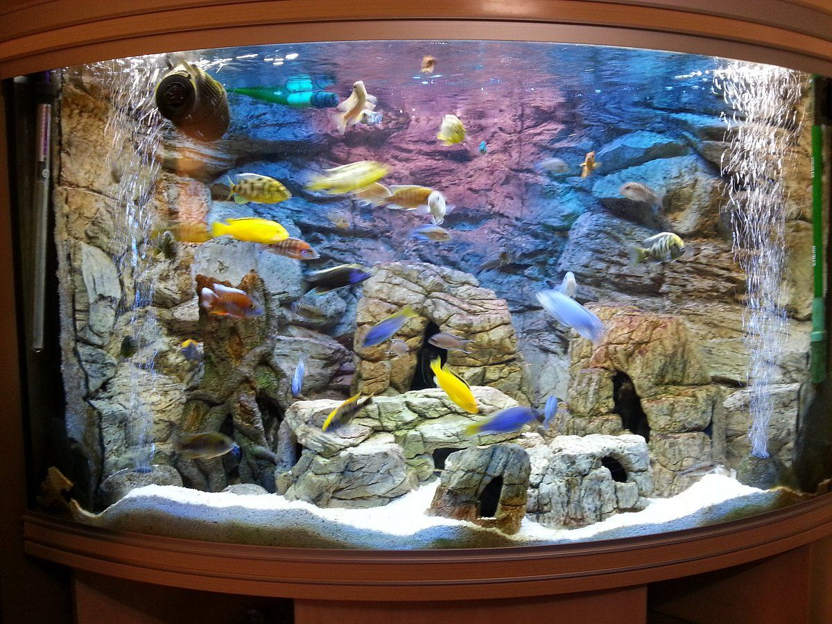 3d aquarium fish tank background feature rock - 3d Background Made To Measure For A Corner Tank And Set Of Rocks Matching The Background