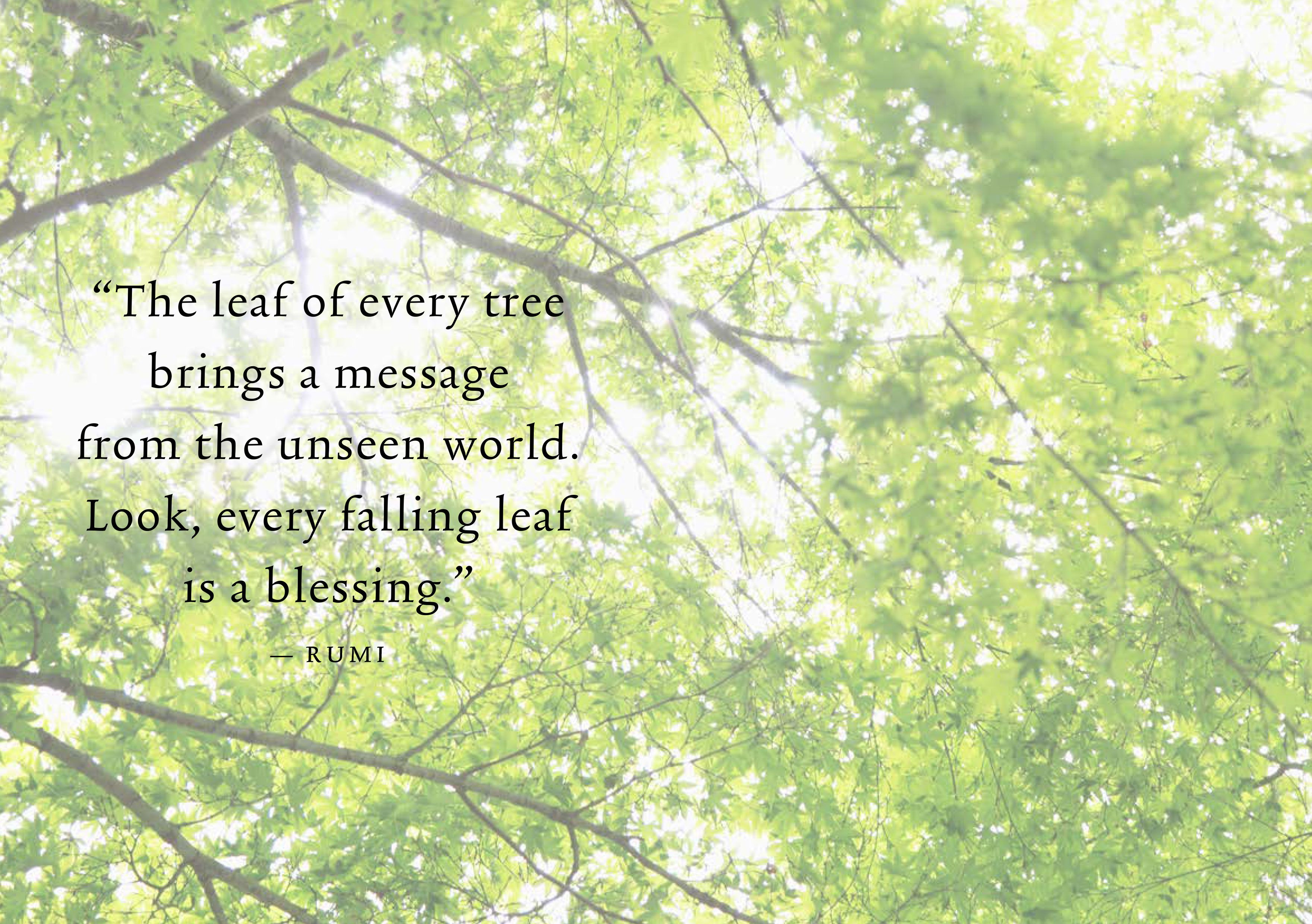 Quote Tree Healing